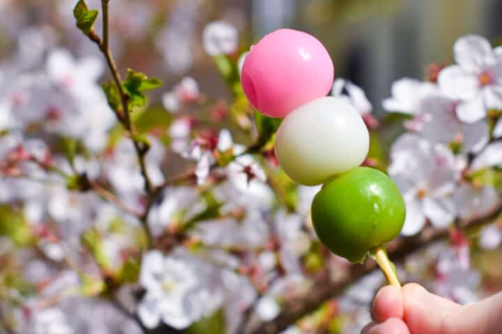 hanami dango held in front of cherry blossom tree