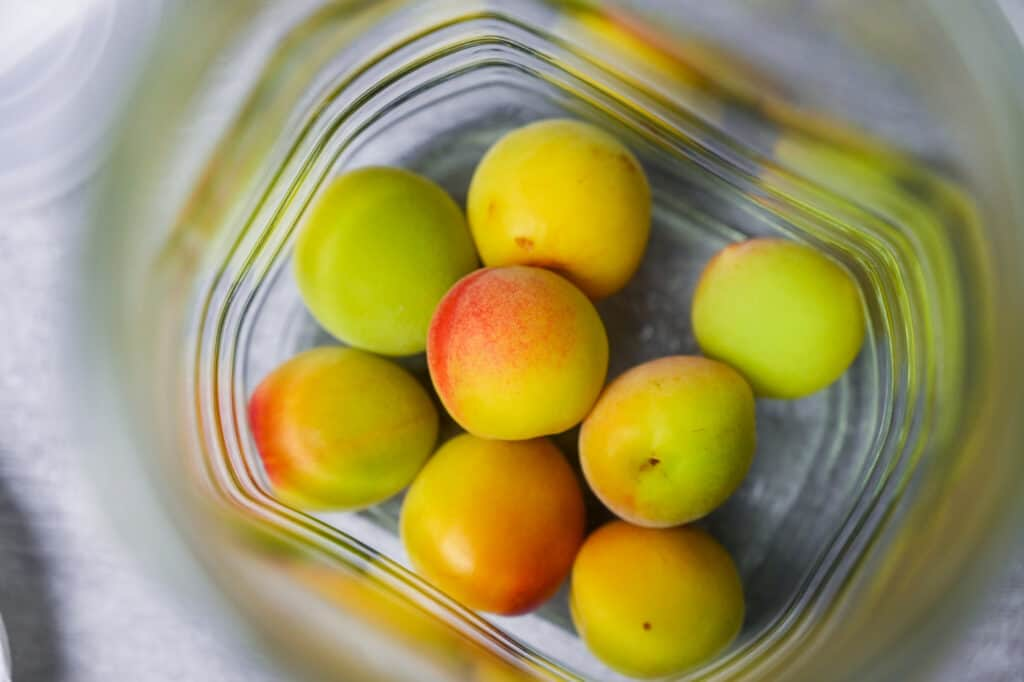 A layer of ume plums