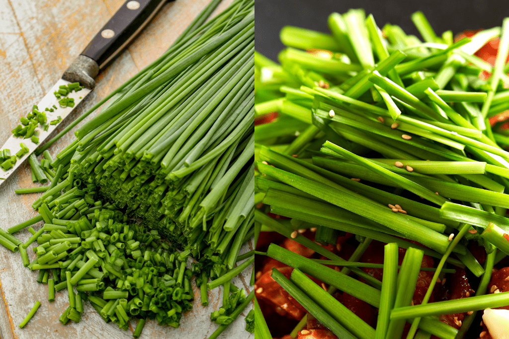 Onion chive and garlic chive